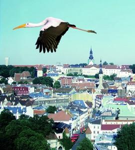 Braas-Storch